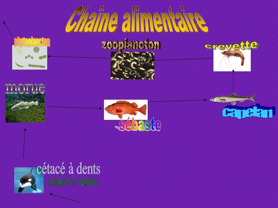Algues du golfe du Saint-Laurent Le golfe du Saint-Laurent compte 21 espèces dalgues brunes (ex.: laminaire), 16 espèces dalgues vertes (ex.: laitue d