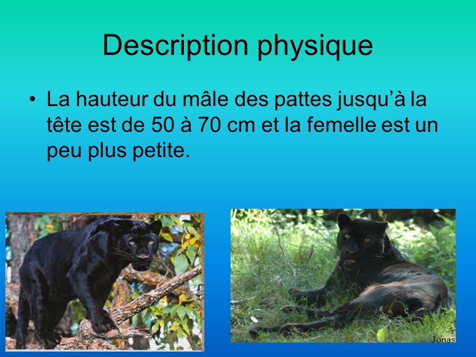 Description physique La hauteur du mâle des pattes jusquà la tête est de 50 à 70 cm et la femelle est un peu plus petite.