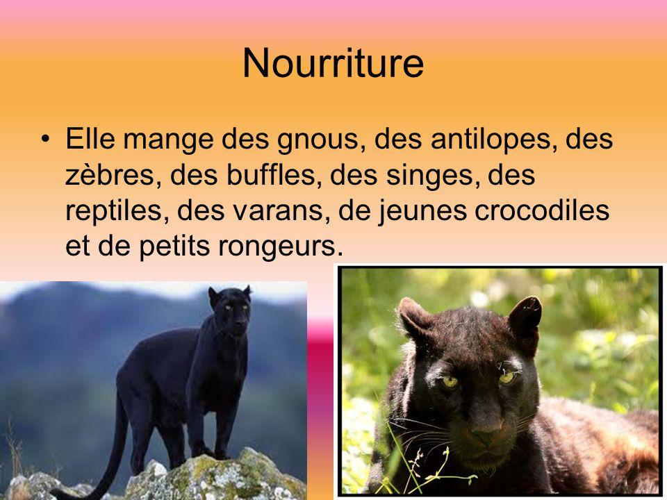 Nourriture Elle mange des gnous, des antilopes, des zèbres, des buffles, des singes, des reptiles, des varans, de jeunes crocodiles et de petits rongeurs.