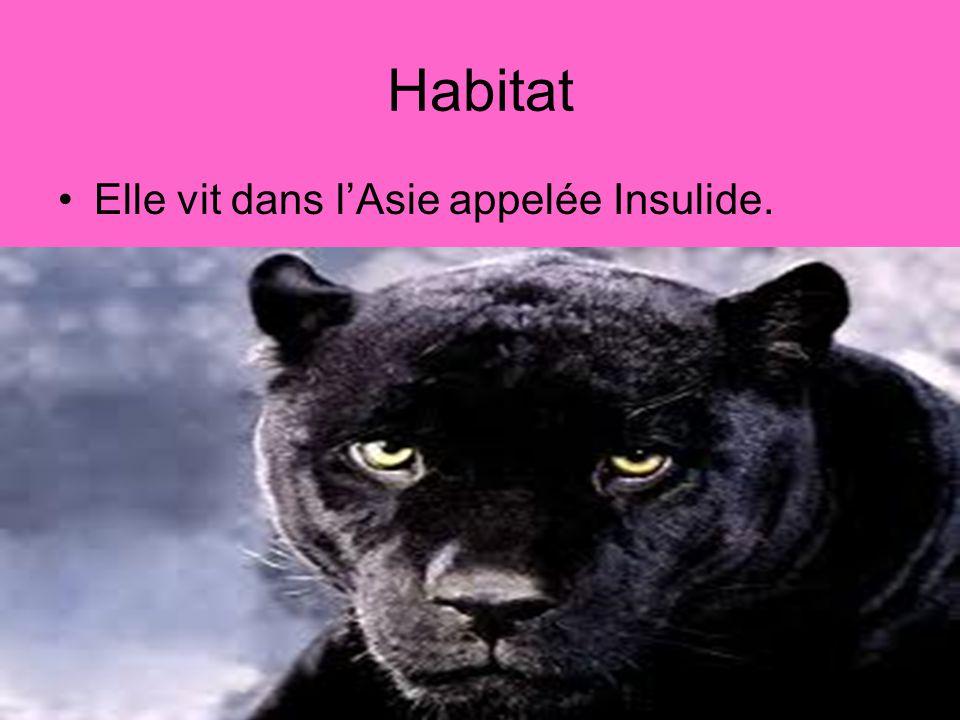 Habitat Elle vit dans lAsie appelée Insulide.