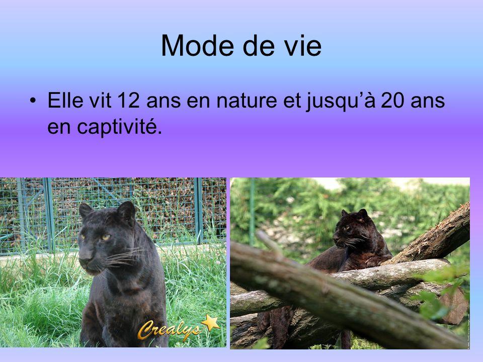 Mode de vie Elle vit 12 ans en nature et jusquà 20 ans en captivité.