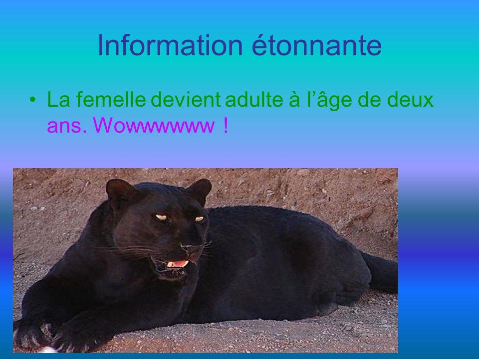Questions La panthère noire vit 12 ans dans la nature et combien de temps en captivité?.