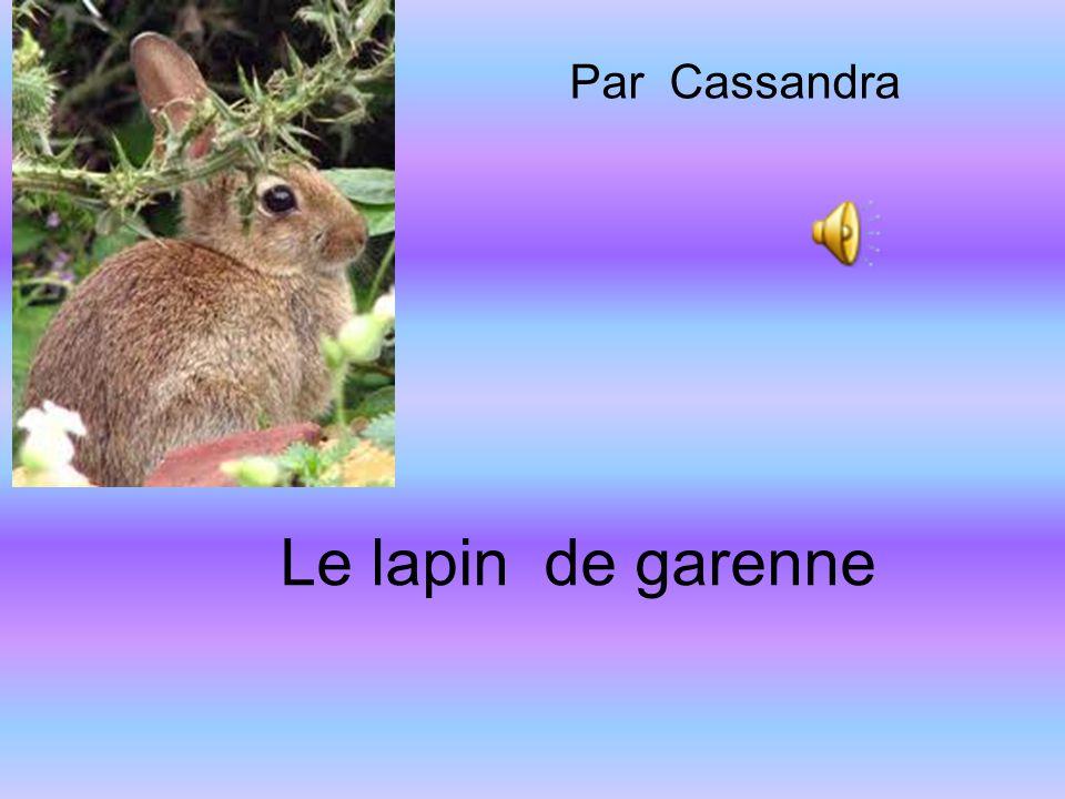 Le lapin de garenne Par Cassandra