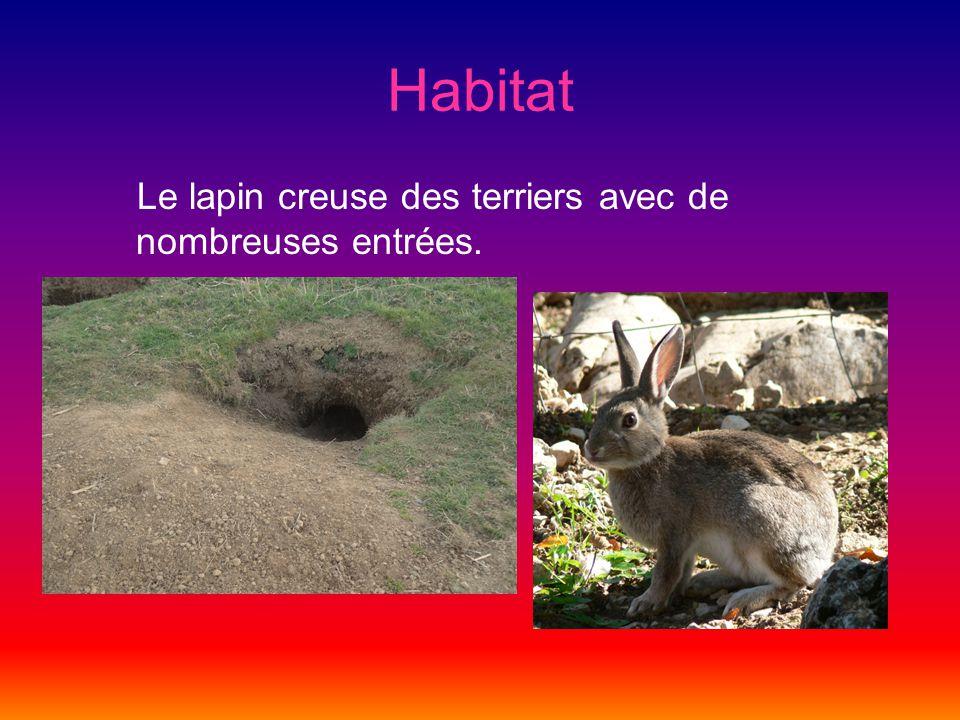 Prédateurs Les prédateurs du lapin sont par exemple le renard, le furet, la belette, la fouine, et lhermine.