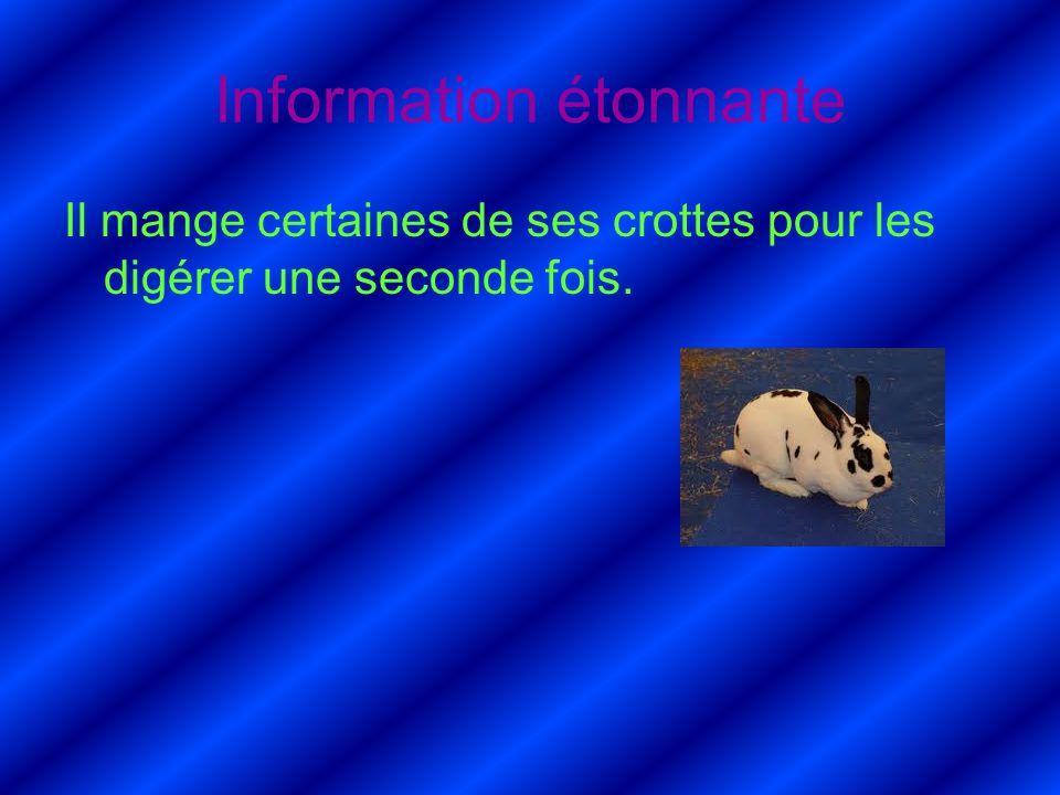 Information étonnante Il mange certaines de ses crottes pour les digérer une seconde fois.