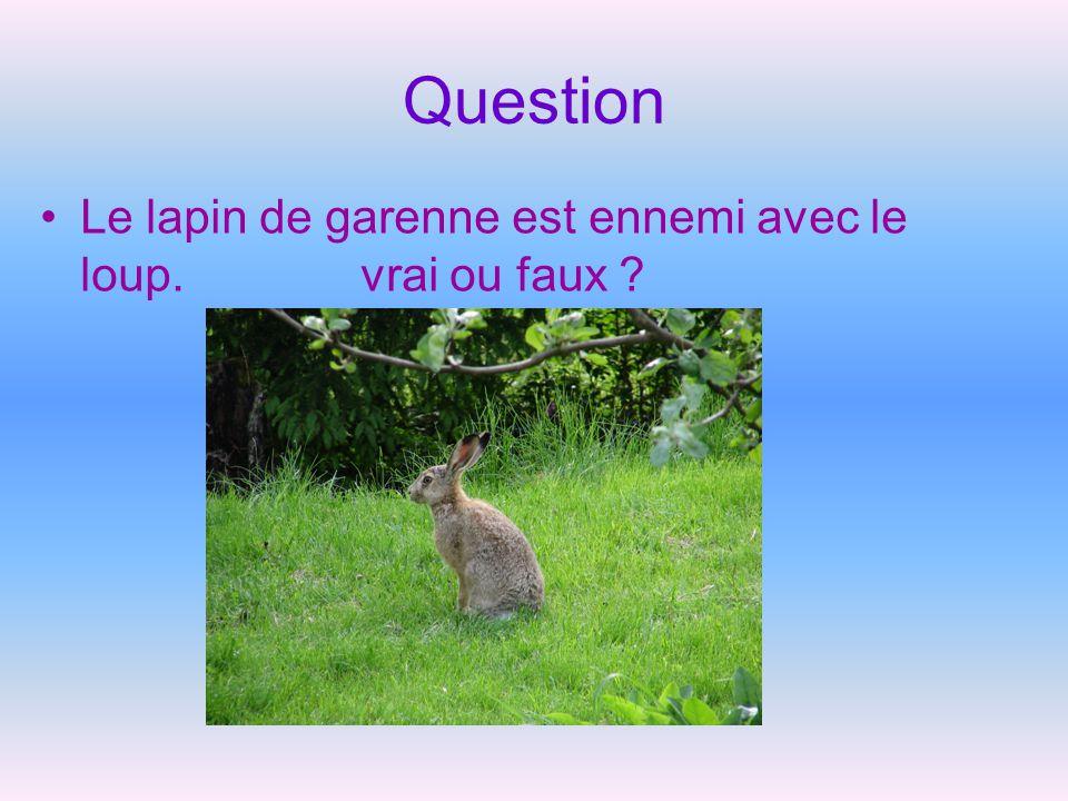 Question Le lapin de garenne est ennemi avec le loup. vrai ou faux ?