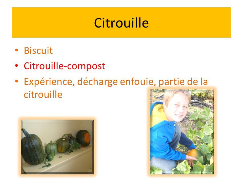 Citrouille Biscuit Citrouille-compost Expérience, décharge enfouie, partie de la citrouille