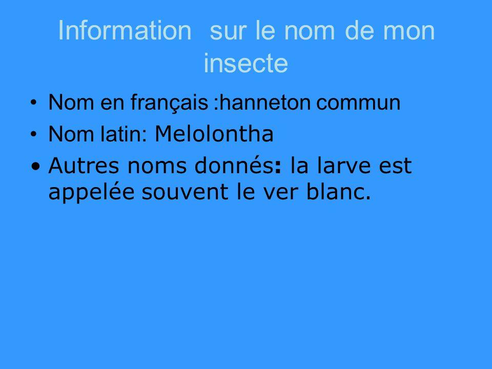 Information sur le nom de mon insecte Nom en français :hanneton commun Nom latin: Melolontha Autres noms donnés: la larve est appelée souvent le ver blanc.