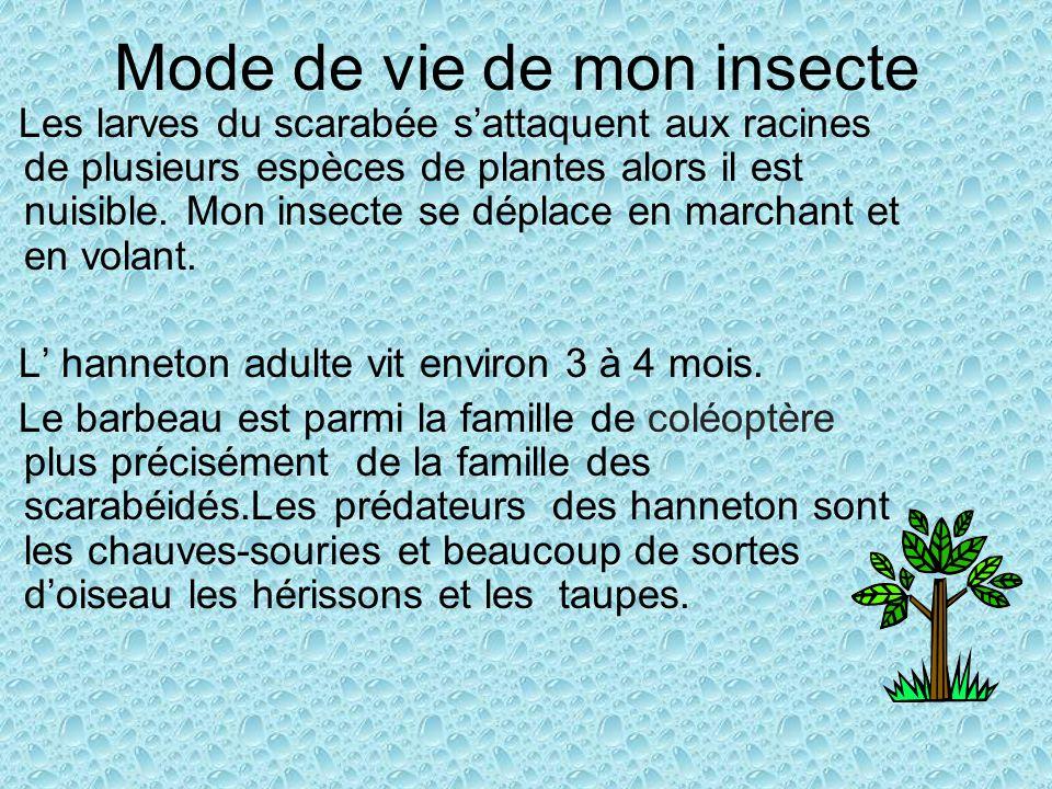 Mode de vie de mon insecte Les larves du scarabée sattaquent aux racines de plusieurs espèces de plantes alors il est nuisible. Mon insecte se déplace
