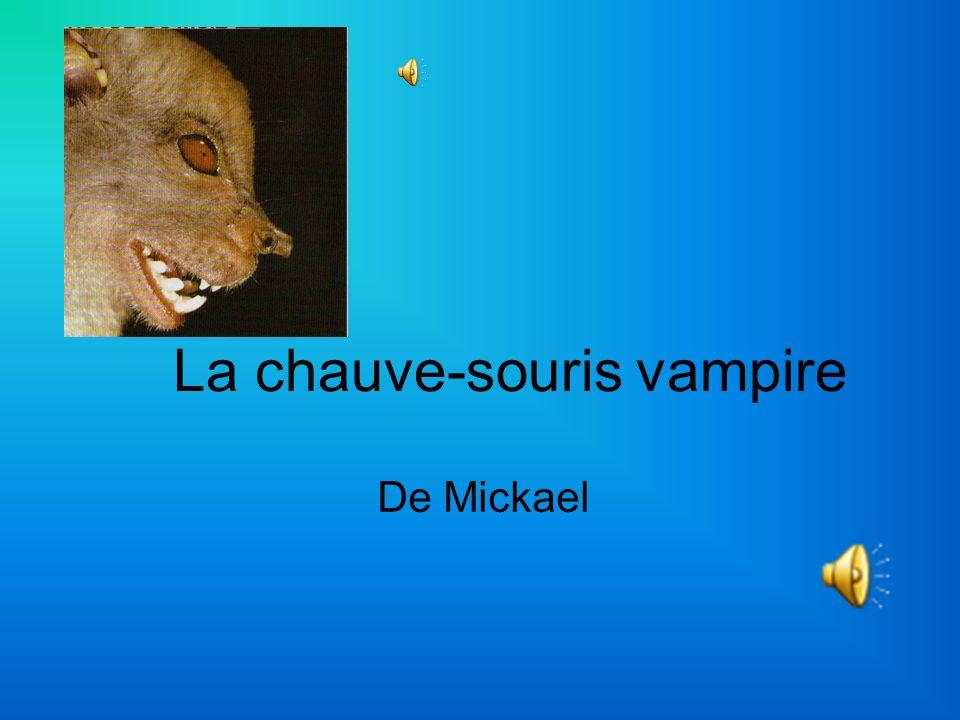 La chauve-souris vampire De Mickael