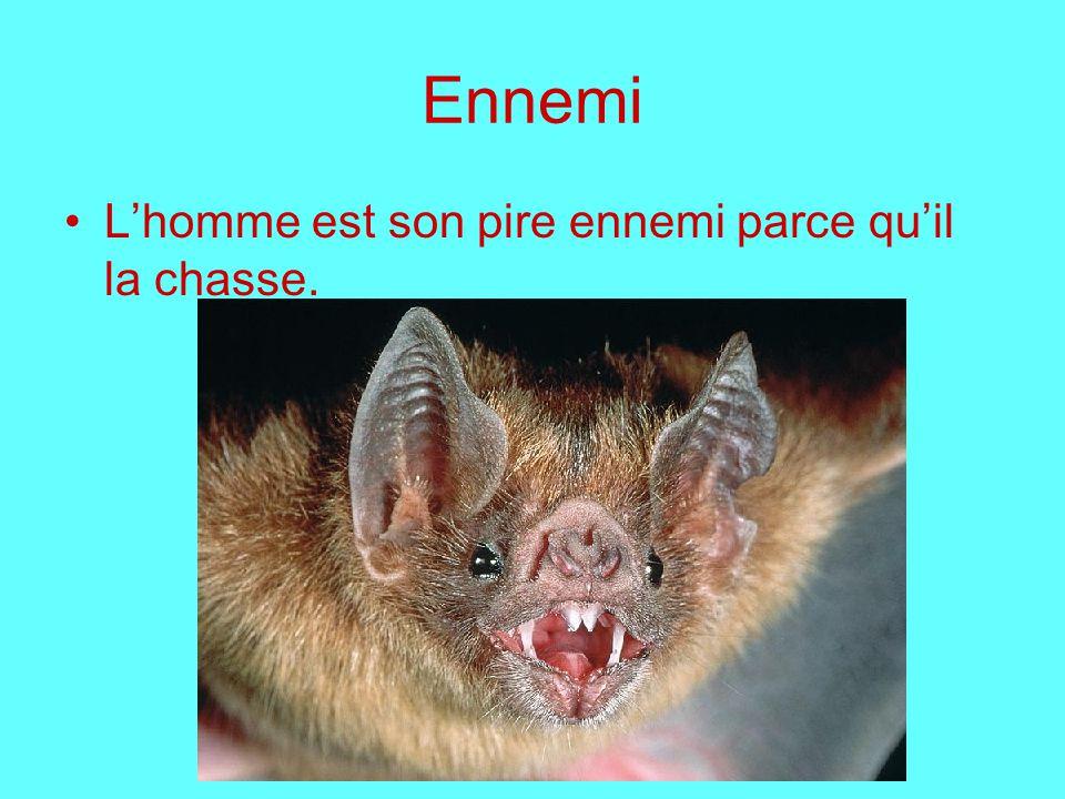 Ennemi Lhomme est son pire ennemi parce quil la chasse.