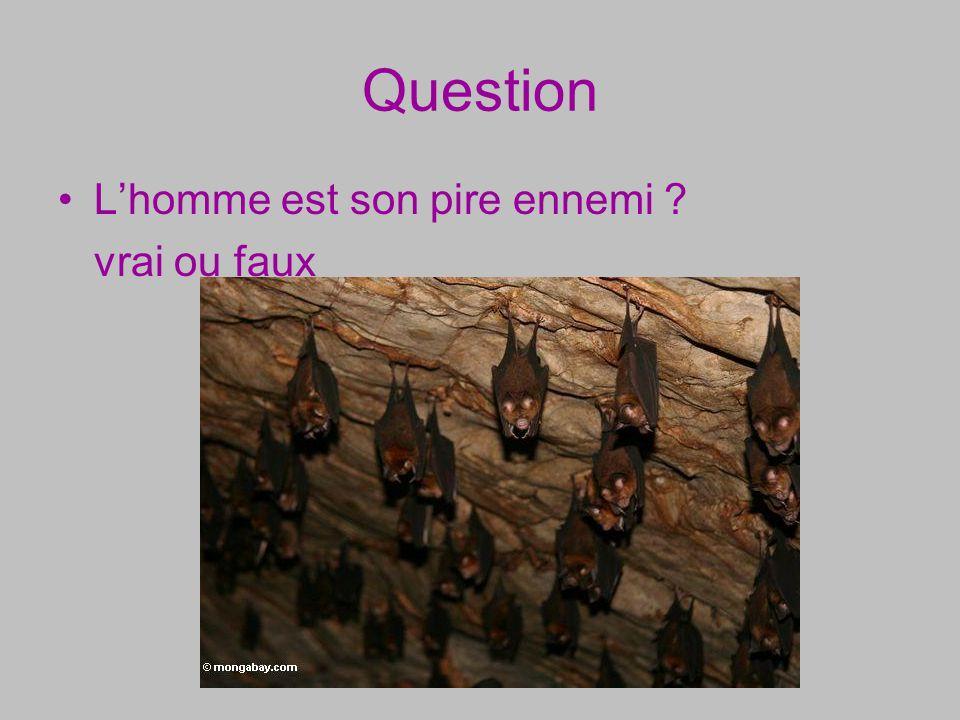 Question Lhomme est son pire ennemi ? vrai ou faux