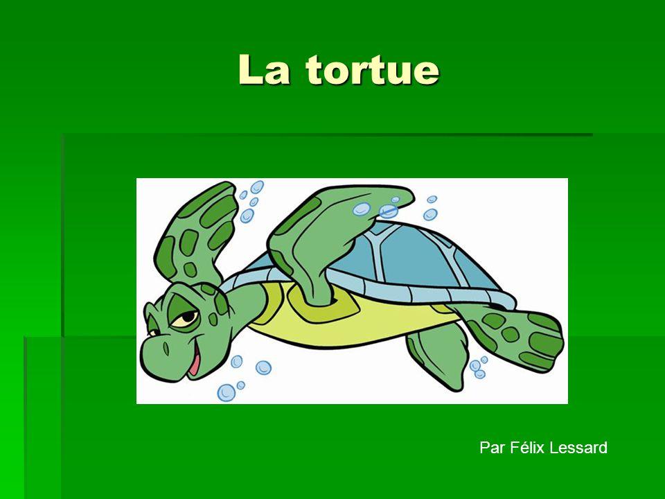 Le nom de mon animal est la tortue. Lespèce de la tortue est le reptile.