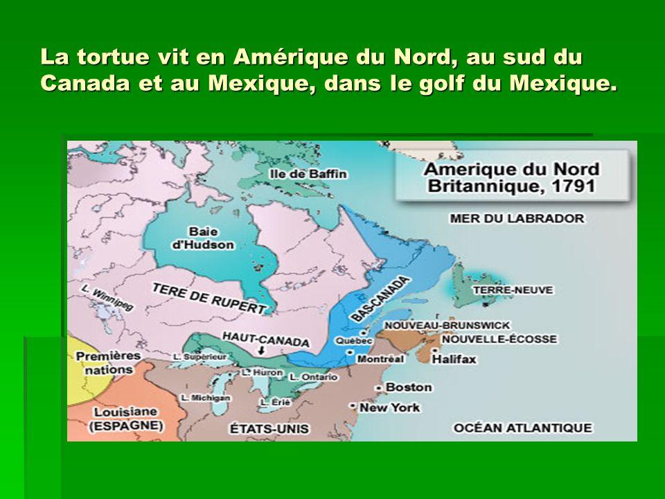 La tortue vit en Amérique du Nord, au sud du Canada et au Mexique, dans le golf du Mexique.