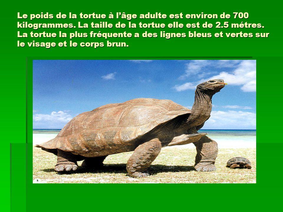 Le poids de la tortue à lâge adulte est environ de 700 kilogrammes.