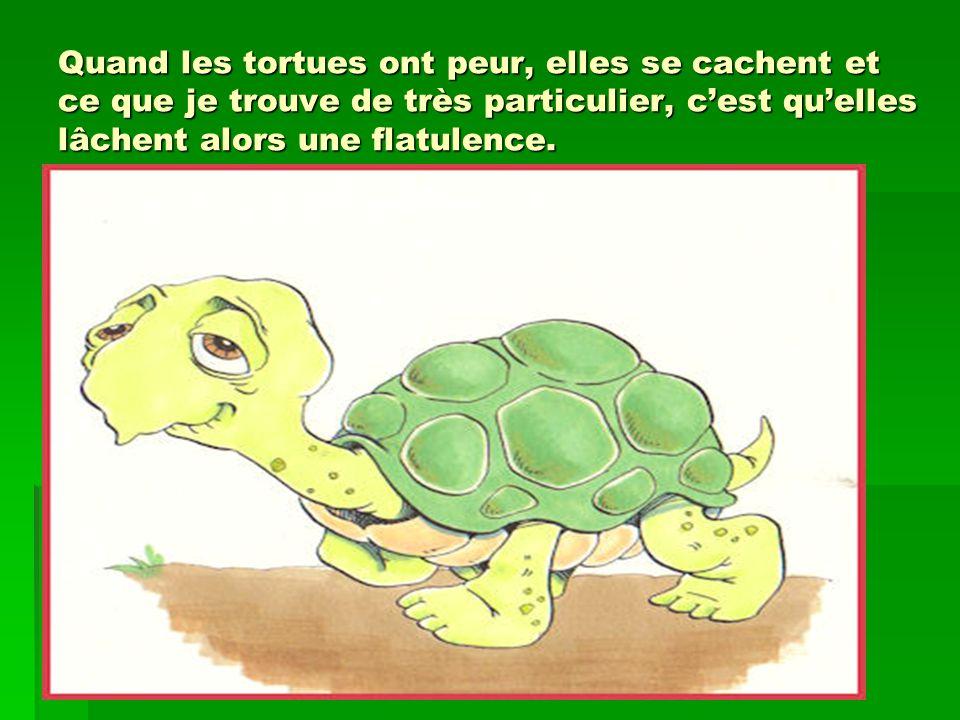 Quand les tortues ont peur, elles se cachent et ce que je trouve de très particulier, cest quelles lâchent alors une flatulence.