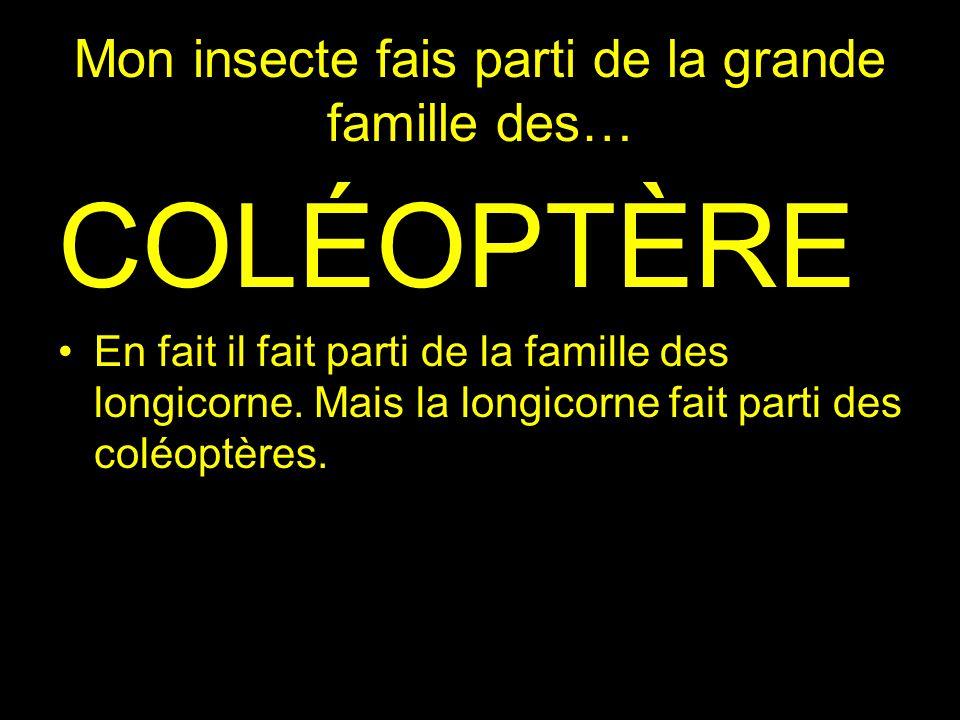 Mon insecte fais parti de la grande famille des… COLÉOPTÈRE En fait il fait parti de la famille des longicorne. Mais la longicorne fait parti des colé
