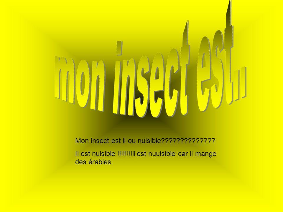 Mon insect est il ou nuisible?????????????? Il est nuisible !!!!!!!il est nuuisible car il mange des érables.