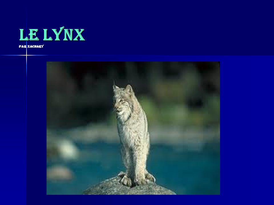Le lynx par Zachary