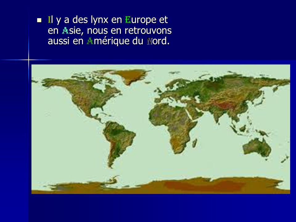Il y a des lynx en Europe et en Asie, nous en retrouvons aussi en Amérique du nord.