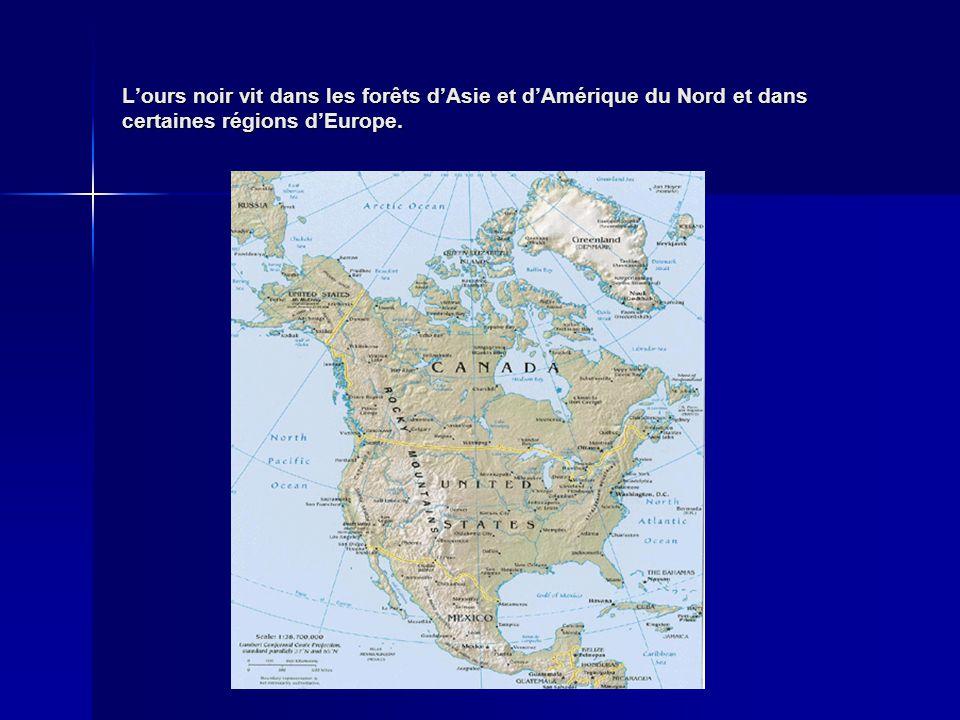 Lours noir vit dans les forêts dAsie et dAmérique du Nord et dans certaines régions dEurope.