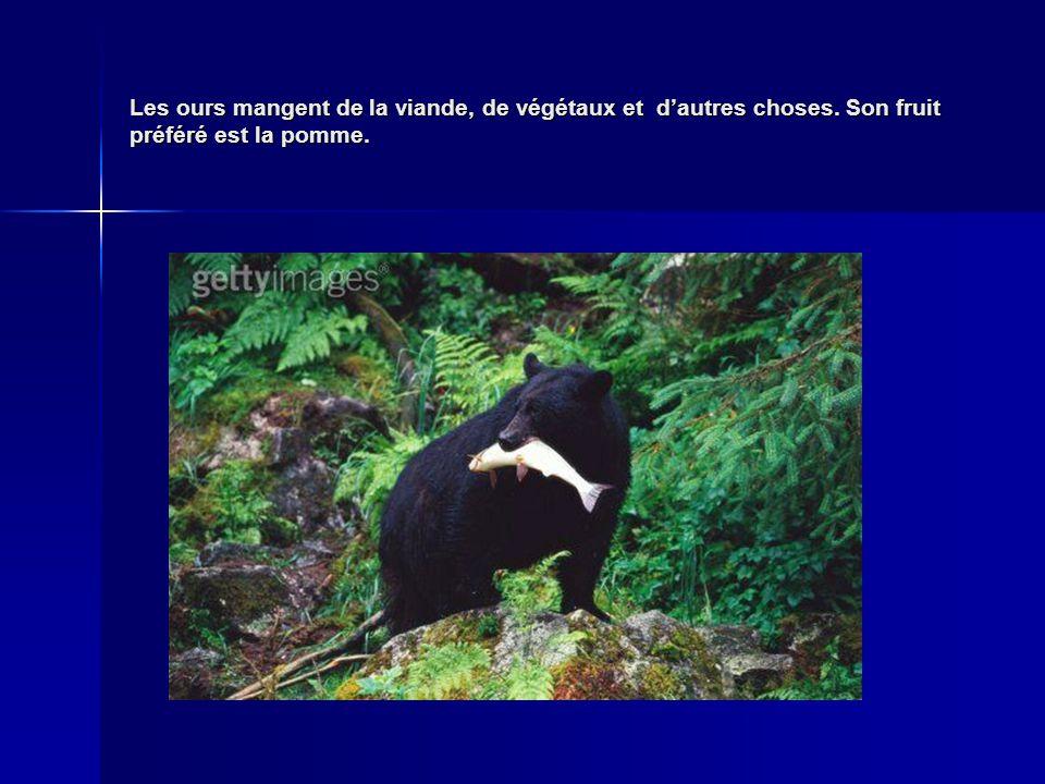 Les ours mangent de la viande, de végétaux et dautres choses. Son fruit préféré est la pomme.