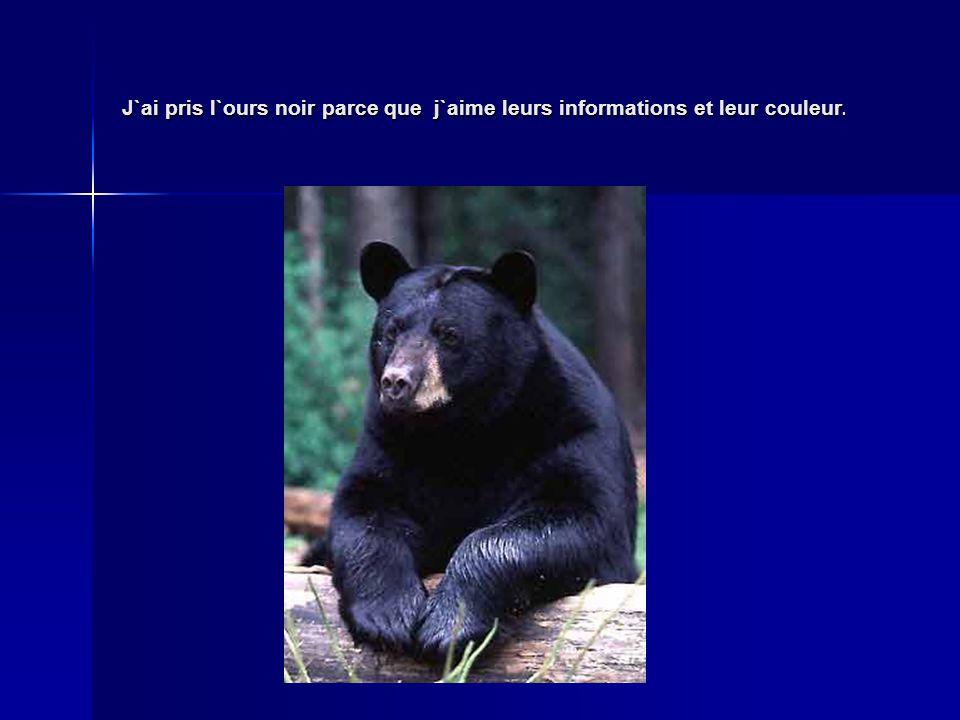 J`ai pris l`ours noir parce que j`aime leurs informations et leur couleur.