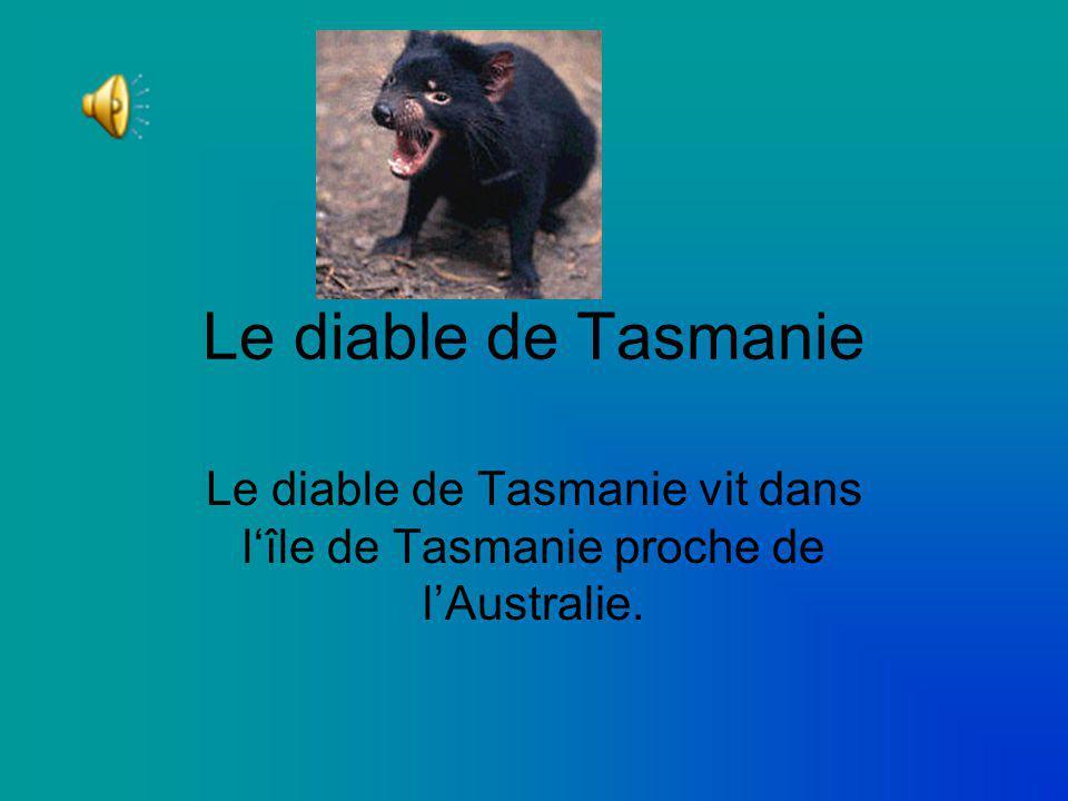Le diable de Tasmanie Le diable de Tasmanie vit dans lîle de Tasmanie proche de lAustralie.