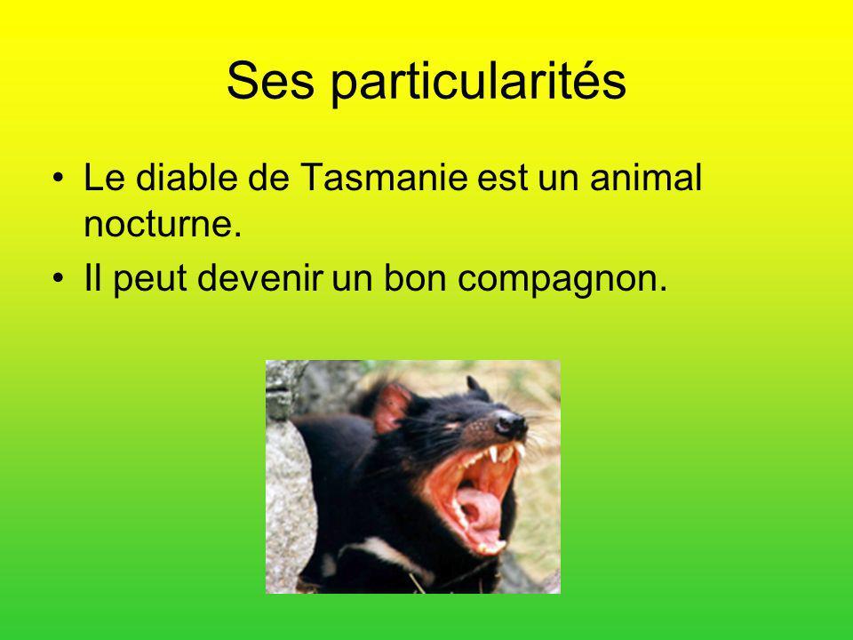 Ses particularités Le diable de Tasmanie est un animal nocturne. Il peut devenir un bon compagnon.