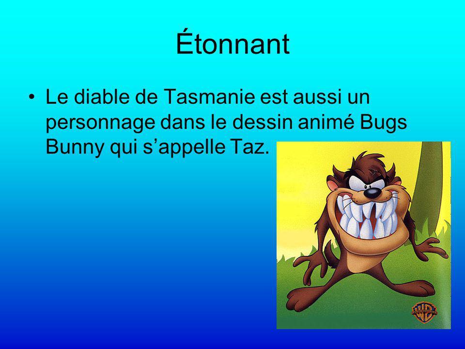 Étonnant Le diable de Tasmanie est aussi un personnage dans le dessin animé Bugs Bunny qui sappelle Taz.