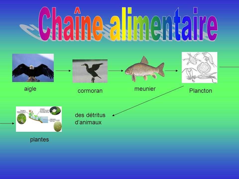 Sortes de poissons qui vivent dans les Grands Lacs : Il y a plein de sortes de truites, des perches, des sandres, des brochets, des poissons-chats, des lottes, des éperlans, des esturgeons, des corégones de lac, des crapets.