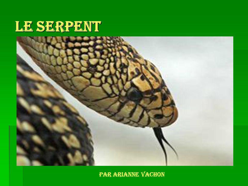 Le serpent Par Arianne Vachon