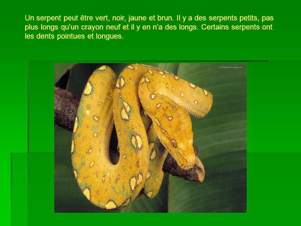 Un serpent peut être vert, noir, jaune et brun. Il y a des serpents petits, pas plus longs quun crayon neuf et il y en na des longs. Certains serpents