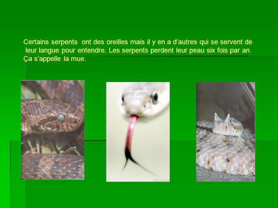 Certains serpents ont des oreilles mais il y en a dautres qui se servent de leur langue pour entendre. Les serpents perdent leur peau six fois par an.