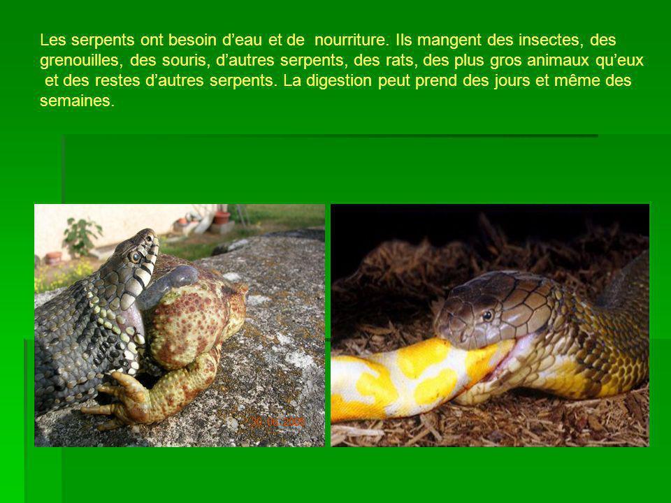 Les serpents ont besoin deau et de nourriture. Ils mangent des insectes, des grenouilles, des souris, dautres serpents, des rats, des plus gros animau