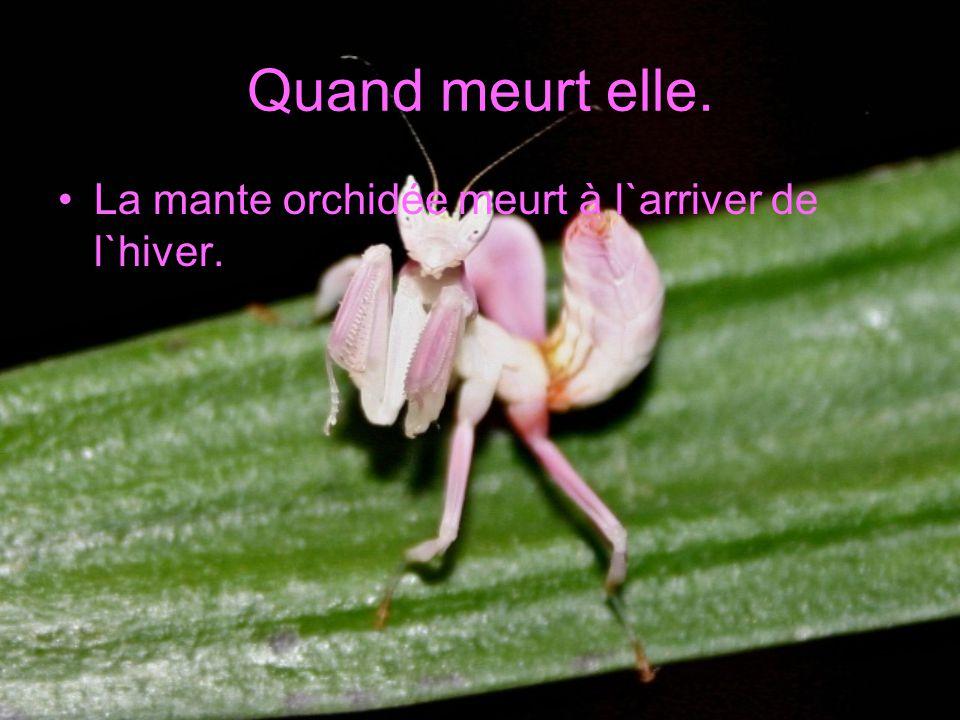 Mon insecte est très utile parce qu`elle mange les insectes qui s`approche des fleur orchidée elle les protège beaucoup.