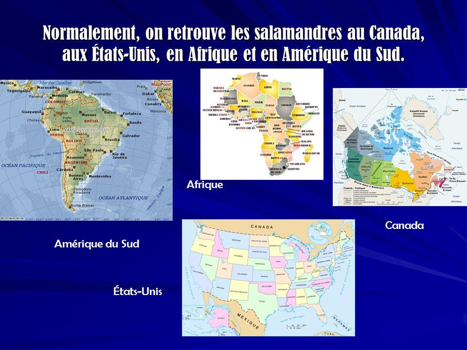 Normalement, on retrouve les salamandres au Canada, aux États-Unis, en Afrique et en Amérique du Sud. États-Unis Amérique du Sud Afrique Canada