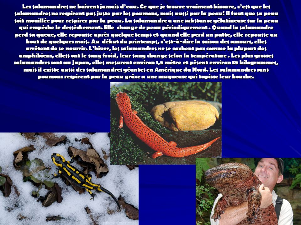 Les salamandres ne boivent jamais deau. Ce que je trouve vraiment bizarre, cest que les salamandres ne respirent pas juste par les poumons, mais aussi