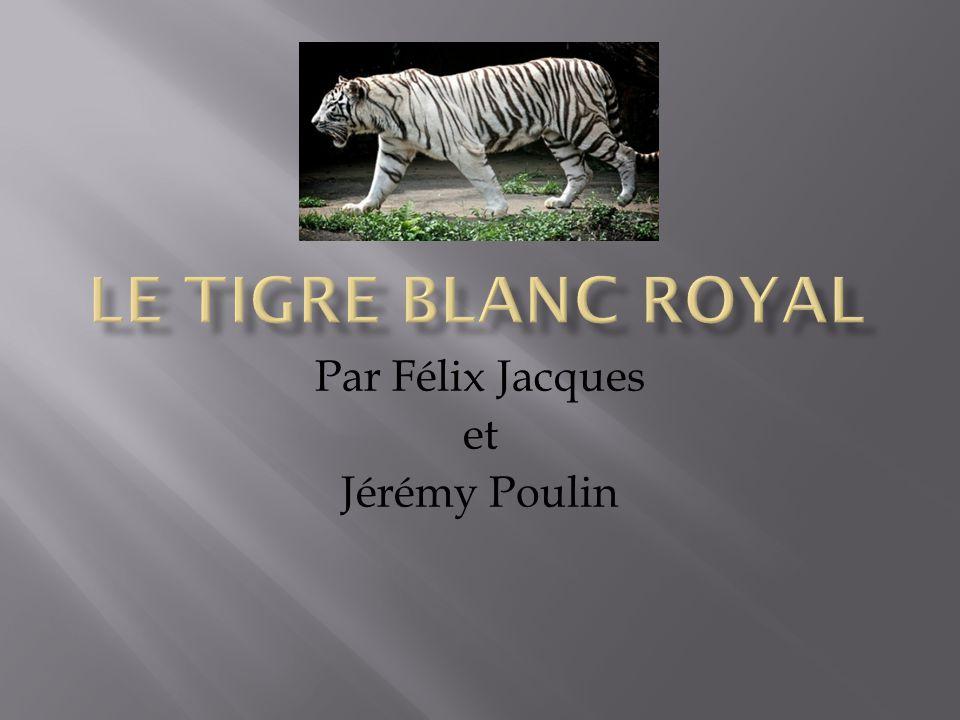Par Félix Jacques et Jérémy Poulin