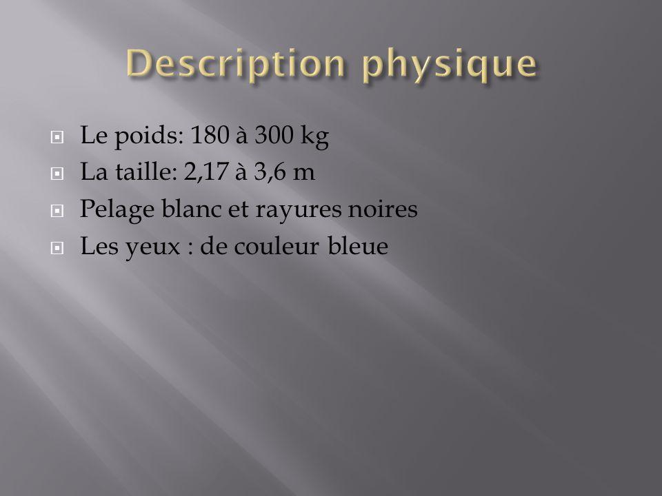 Le poids: 180 à 300 kg La taille: 2,17 à 3,6 m Pelage blanc et rayures noires Les yeux : de couleur bleue