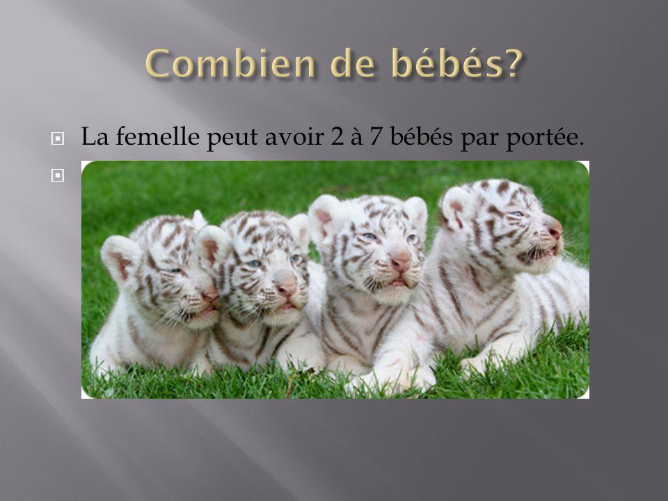 La femelle peut avoir 2 à 7 bébés par portée.
