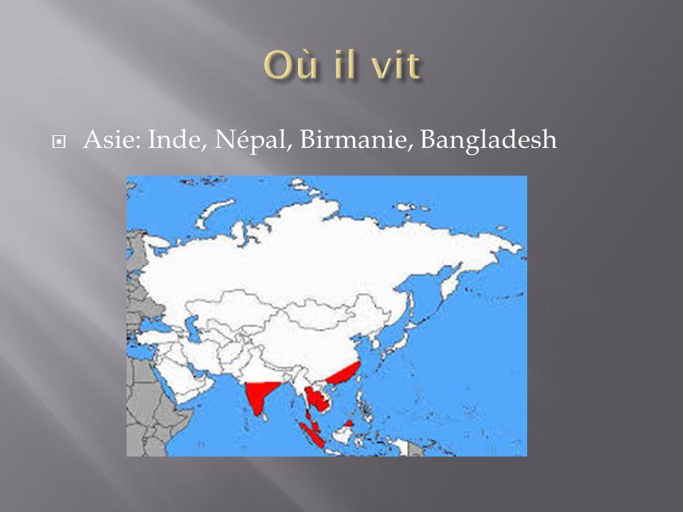 Asie: Inde, Népal, Birmanie, Bangladesh