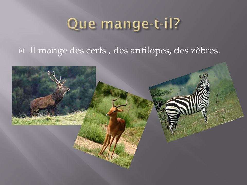 Il mange des cerfs, des antilopes, des zèbres.