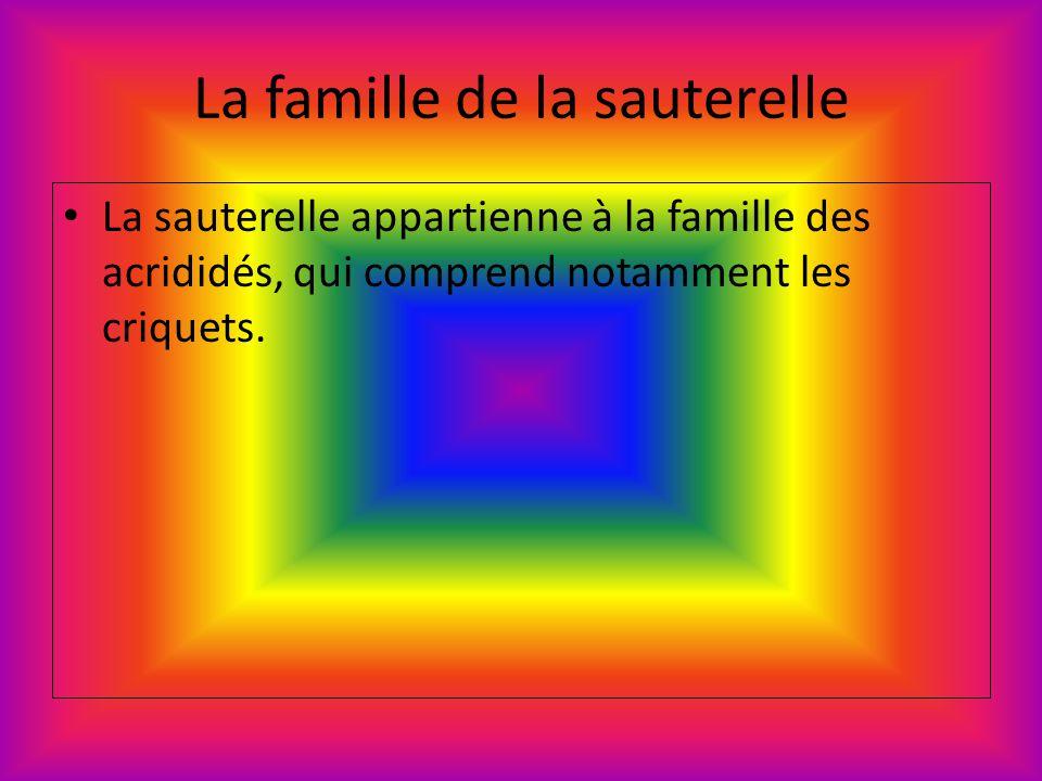 La famille de la sauterelle La sauterelle appartienne à la famille des acrididés, qui comprend notamment les criquets.