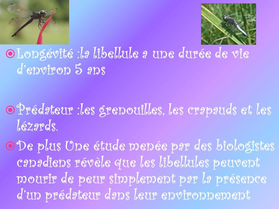 Longévité :la libellule a une durée de vie denviron 5 ans Prédateur :les grenouilles, les crapauds et les lézards. De plus Une étude menée par des bio