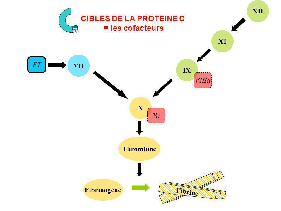 VII Thrombine X Fibrinogène IX XI XII FT VIIIa Va Fibrine CIBLES DE LA PROTEINE C = les cofacteurs a