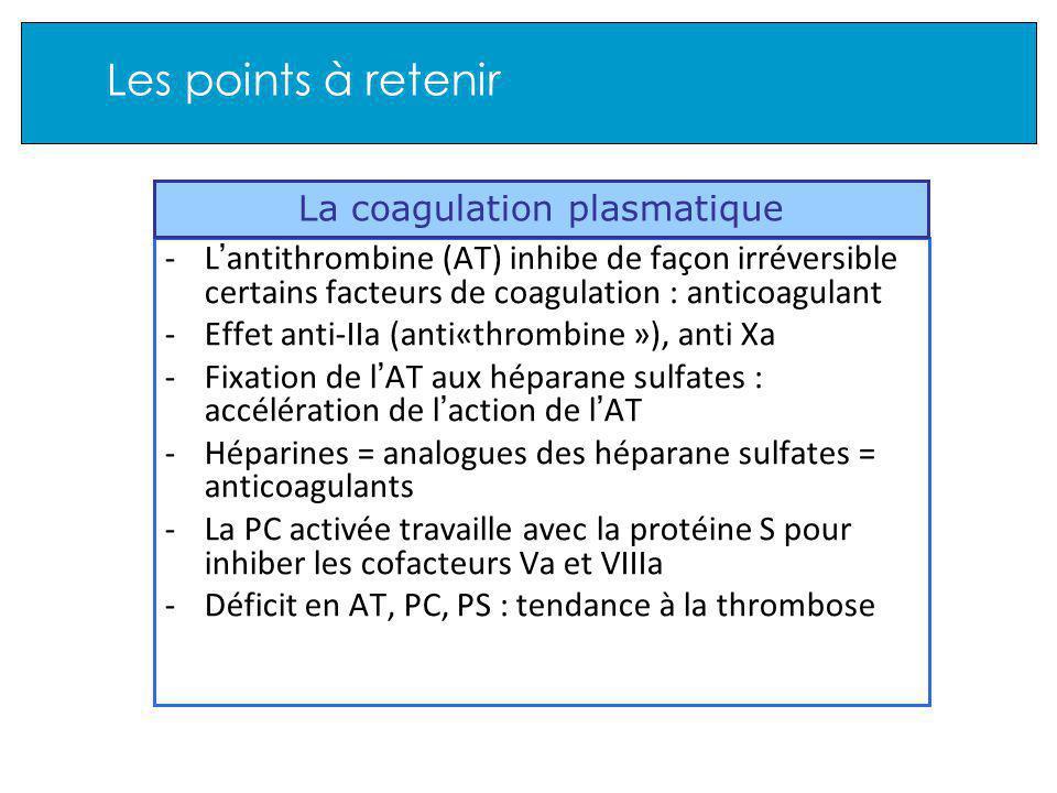 Les points à retenir -L antithrombine (AT) inhibe de façon irréversible certains facteurs de coagulation : anticoagulant -Effet anti-IIa (anti«thrombine »), anti Xa -Fixation de l AT aux héparane sulfates : accélération de l action de l AT -Héparines = analogues des héparane sulfates = anticoagulants -La PC activée travaille avec la protéine S pour inhiber les cofacteurs Va et VIIIa -Déficit en AT, PC, PS : tendance à la thrombose La coagulation plasmatique