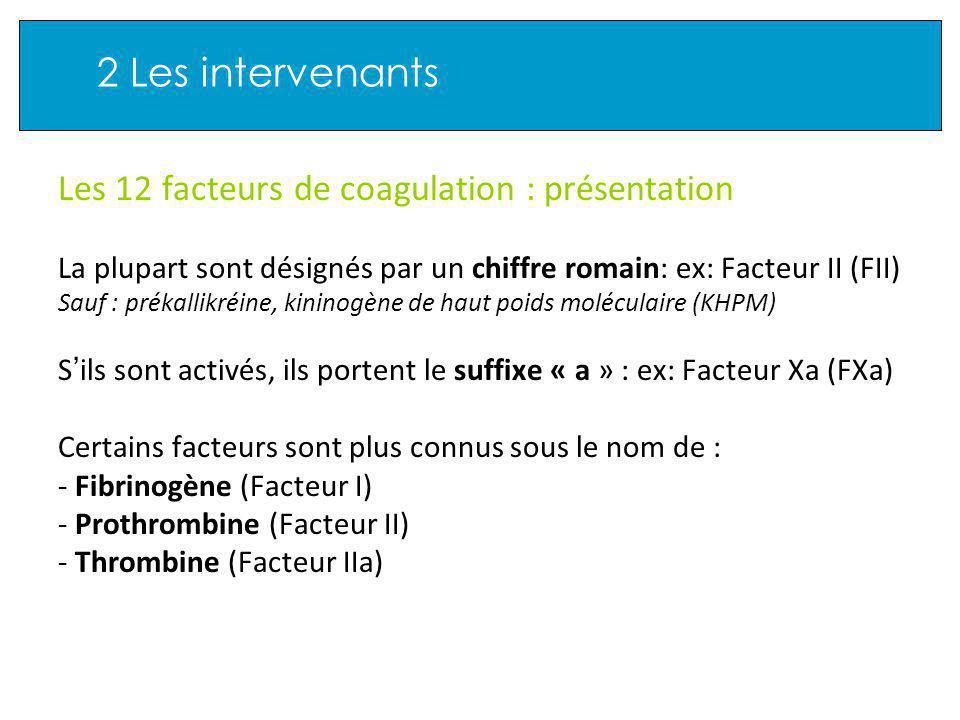 2 Les intervenants Les 12 facteurs de coagulation : présentation La plupart sont désignés par un chiffre romain: ex: Facteur II (FII) Sauf : prékallikréine, kininogène de haut poids moléculaire (KHPM) S ils sont activés, ils portent le suffixe « a » : ex: Facteur Xa (FXa) Certains facteurs sont plus connus sous le nom de : - Fibrinogène (Facteur I) - Prothrombine (Facteur II) - Thrombine (Facteur IIa)