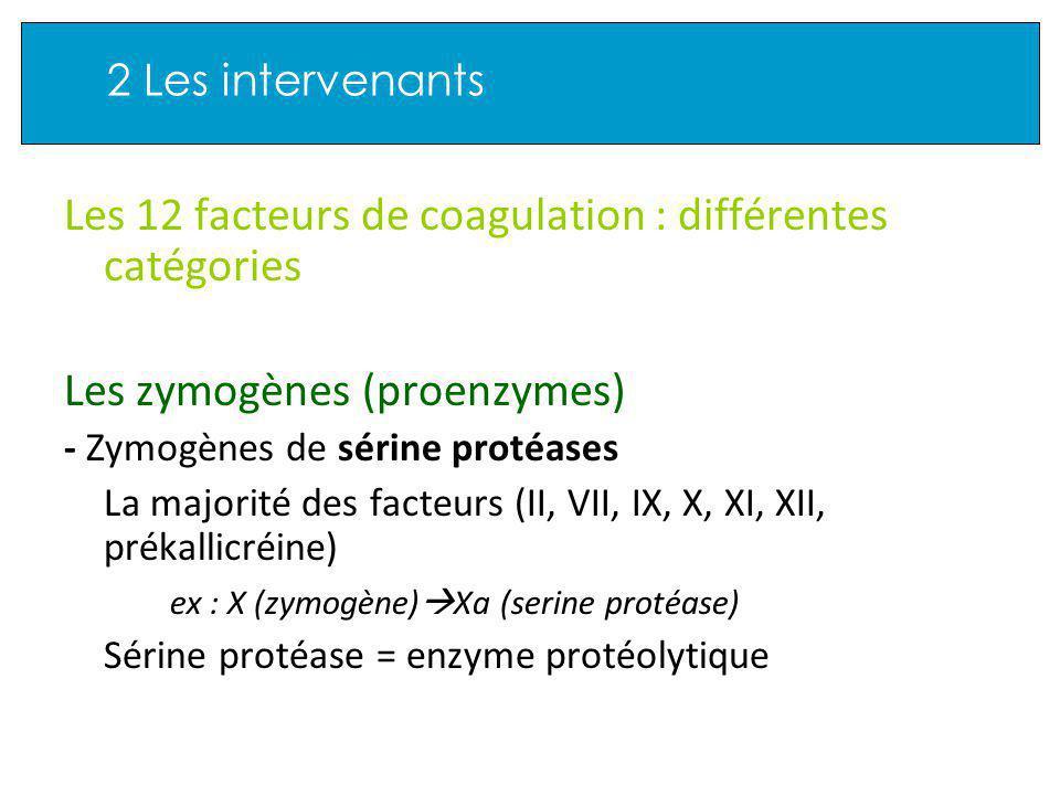 2 Les intervenants Les 12 facteurs de coagulation : différentes catégories Les zymogènes (proenzymes) - Zymogènes de sérine protéases La majorité des facteurs (II, VII, IX, X, XI, XII, prékallicréine) ex : X (zymogène) Xa (serine protéase) Sérine protéase = enzyme protéolytique