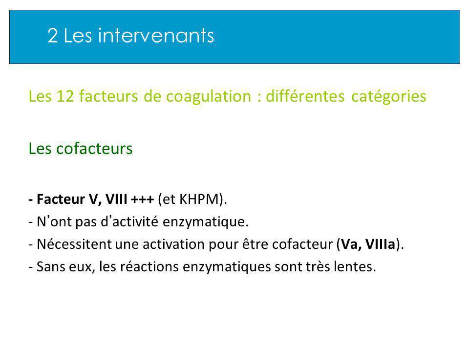 2 Les intervenants Les 12 facteurs de coagulation : différentes catégories Les cofacteurs - Facteur V, VIII +++ (et KHPM).